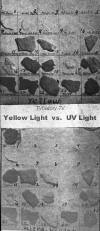 Yellow Light vs. UV Light (50K bytes)